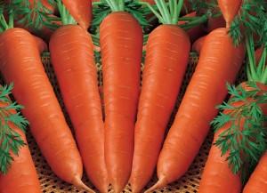 manfaat sering konsumsi wortel