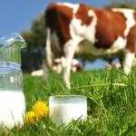 Apa Yang Dimaksud Dengan Susu Organik ?