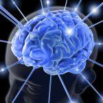 Perbedaan Antara Otak Kanan dan Kiri