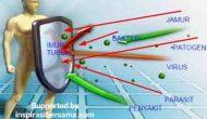 Permalink to Tips Meningkatkan imunitas Tubuh dalam hadapi virus apa saja termasuk chorona